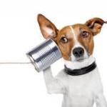 listening skills in security